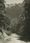 005.[περτούλι(πίνδος)--δάσος